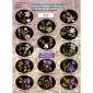 Боголюбов  6-11класс Определитель травянистых растений по цветкам.Раннецветущие растения. (Вентана-Граф)