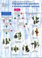 Боголюбов  6-11класс Определитель кустарников в осенне-зимний период. (Вентана-Граф)